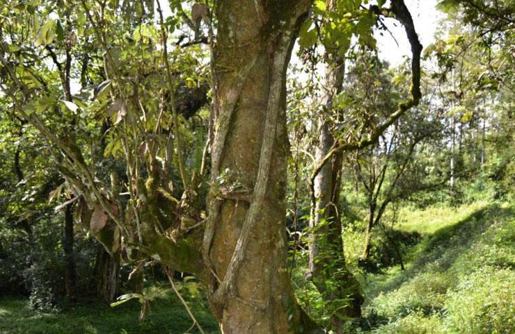 Bururi Valley