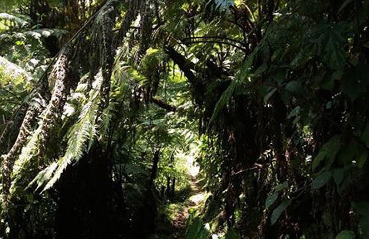 imbaraga trail
