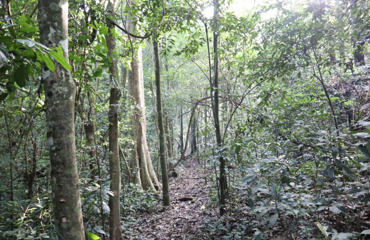 Buhoro trail