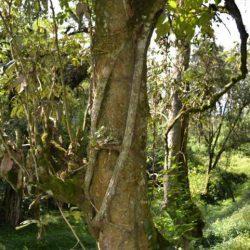 Bururi Valley in Nyungwe National Park